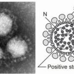 新型コロナウイルス(新型肺炎)、要注意!かかっても、検出できず?